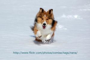 ナナは新雪が積もってると大喜びです
